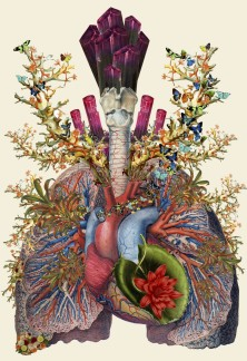 anatomical collage by Travis Bedel http://bedelgeuse.tumblr.com/